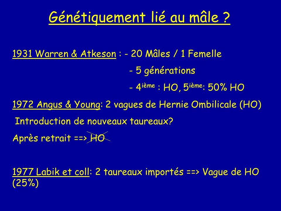 Génétiquement lié au mâle ? 1931 Warren & Atkeson : - 20 Mâles / 1 Femelle - 5 générations - 4 ième : HO, 5 ième : 50% HO 1972 Angus & Young: 2 vagues