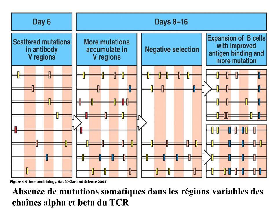 Absence de mutations somatiques dans les régions variables des chaînes alpha et beta du TCR