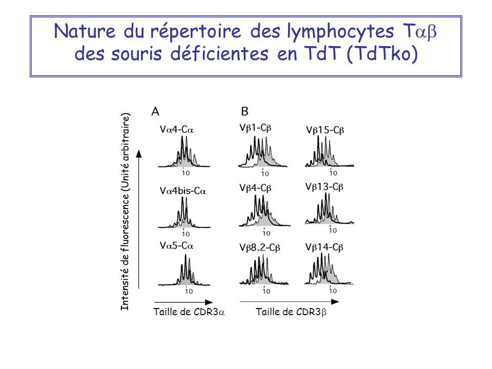 Nature du répertoire des lymphocytes T des souris déficientes en TdT (TdTko) Intensité de fluorescence (Unité arbitraire) Taille de CDR3