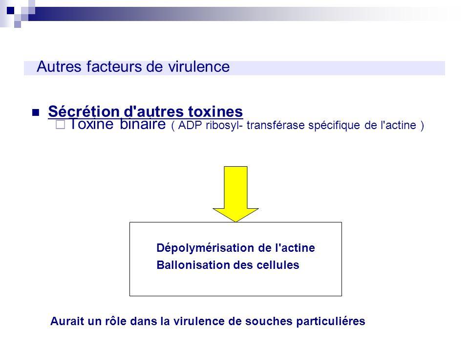 Autres facteurs de virulence Sécrétion d'autres toxines Toxine binaire ( ADP ribosyl- transférase spécifique de l'actine ) Dépolymérisation de l'actin