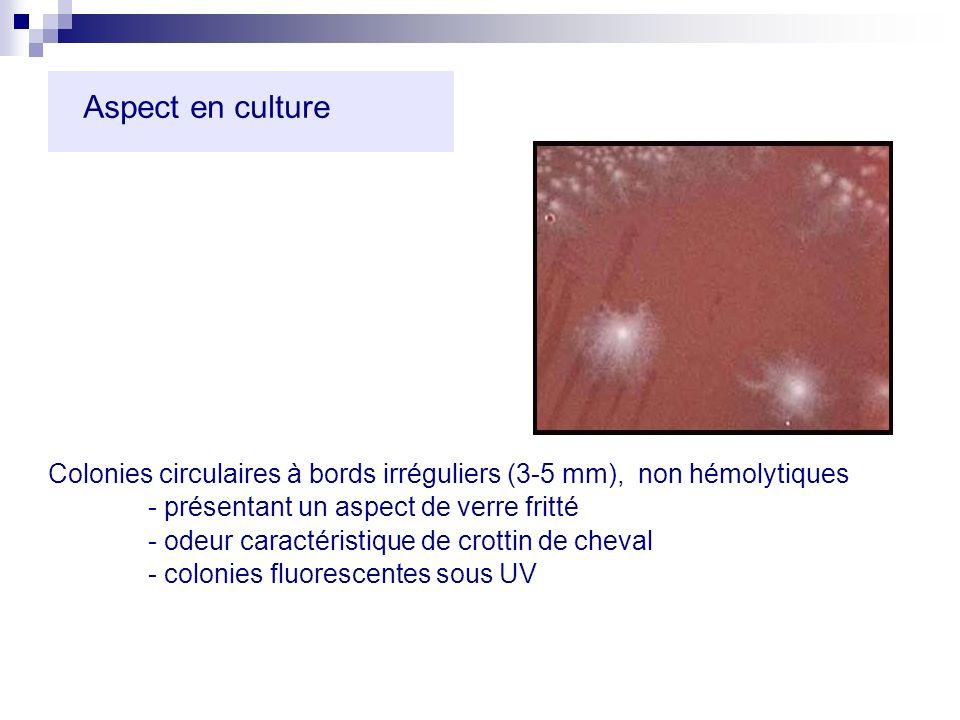 Aspect en culture Colonies circulaires à bords irréguliers (3-5 mm), non hémolytiques - présentant un aspect de verre fritté - odeur caractéristique d
