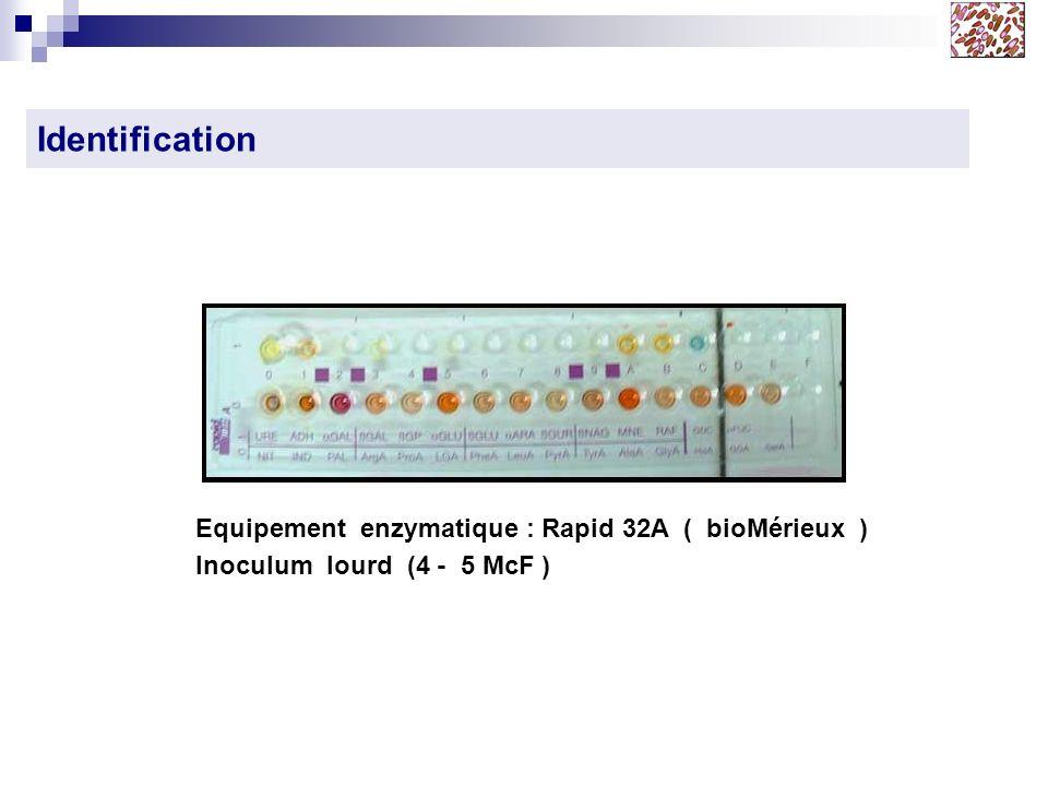 Identification Equipement enzymatique : Rapid 32A ( bioMérieux ) Inoculum lourd (4 - 5 McF )