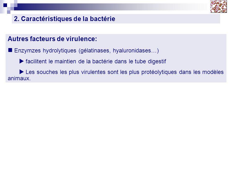 2. Caractéristiques de la bactérie Autres facteurs de virulence: Enzymzes hydrolytiques (gélatinases, hyaluronidases…) facilitent le maintien de la ba