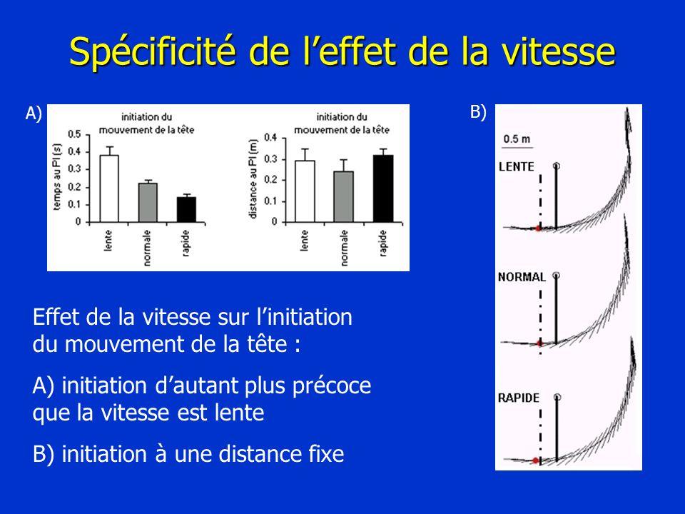 Spécificité de leffet de la vitesse Effet de la vitesse sur linitiation du mouvement de la tête : A) initiation dautant plus précoce que la vitesse es