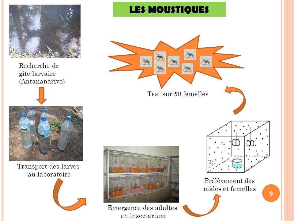9 Recherche de gîte larvaire (Antananarivo) Transport des larves au laboratoire Emergence des adultes en insectarium LES MOUSTIQUES Test sur 50 femell