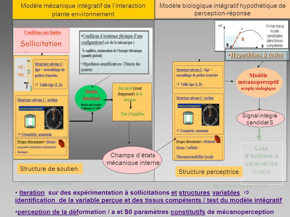 Modèle mécanoperceptif ecophysiologique Lois dactions à paramètres locaux Iteration sur des expérimentation à sollicitations et structures variables i