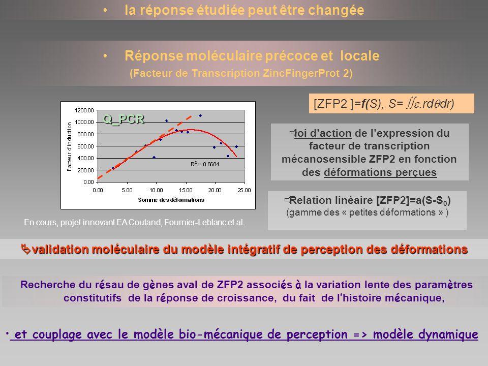 la réponse étudiée peut être changée Réponse moléculaire précoce et locale (Facteur de Transcription ZincFingerProt 2) loi daction de lexpression du f