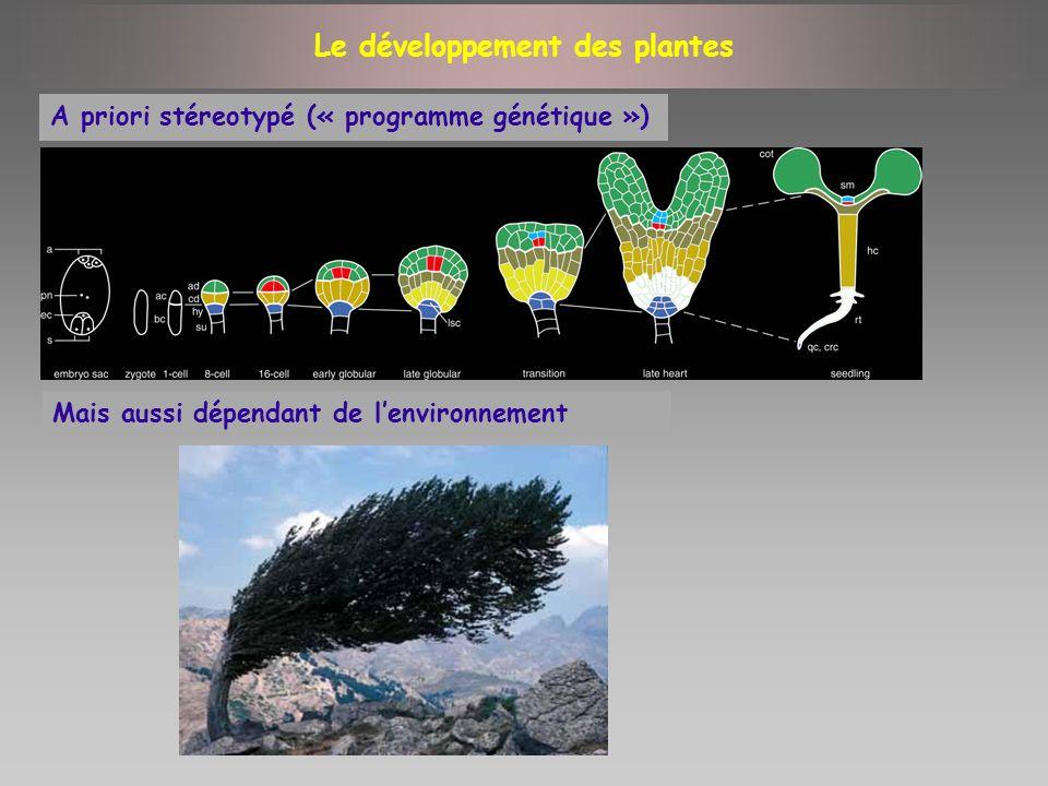 Ex: floral organ mutants in Arabidopsis Ex: flowering mutants in Antirrhinum and Arabidopsis Approche « Bottom-up »: la génétique et la physiologie ont permis lidentification de réseaux de régulation