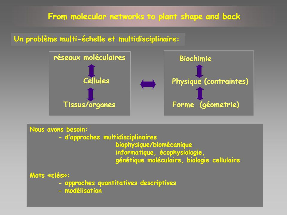 Quantifier la croissance au niveau cellulaire chez les plantes sauvages et mutantes Exprimer lactivité des gènes en termes de morphogenèse cellulaire dans des domaines dexpression spécifiques la génétique de la géometrie (Coen, 2004) Associer lactivité de molécules spécifiques à la morphogenèse Quelques exemples de projets en cours: