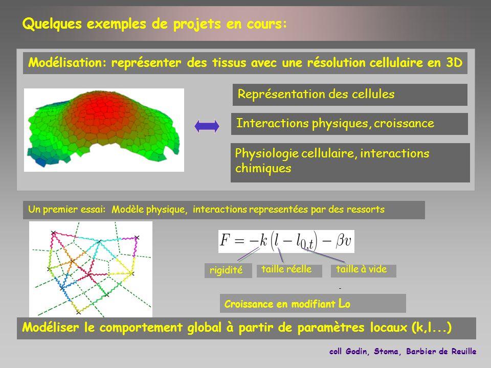 Physiologie cellulaire, interactions chimiques Représentation des cellules Interactions physiques, croissance Modélisation: représenter des tissus ave