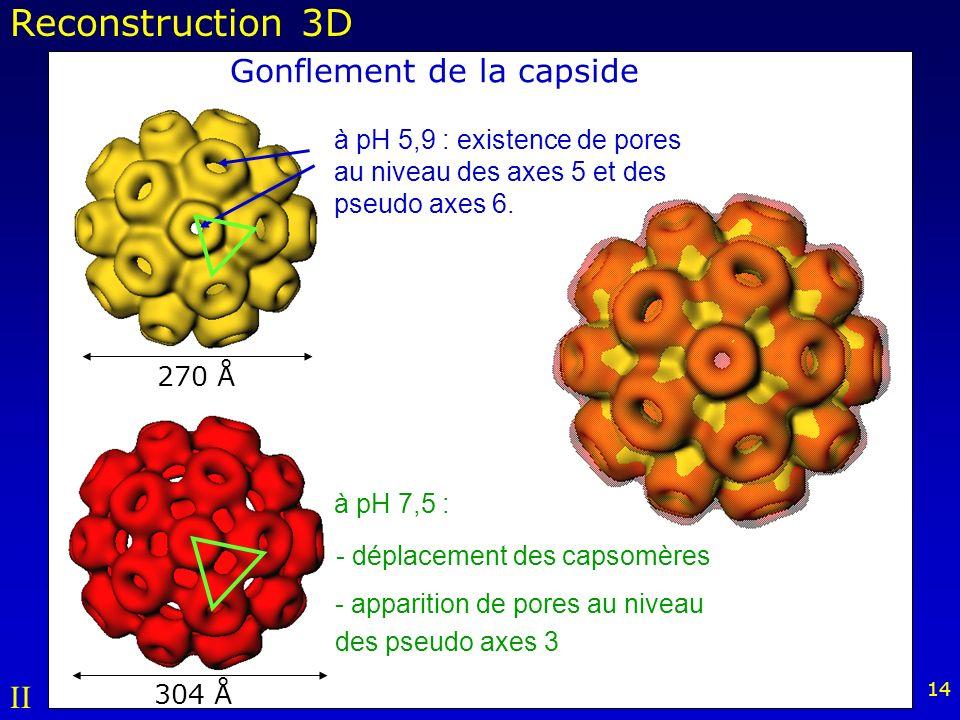 14 270 Å 304 Å à pH 7,5 : à pH 5,9 : existence de pores au niveau des axes 5 et des pseudo axes 6.