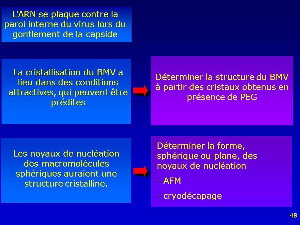 48 LARN se plaque contre la paroi interne du virus lors du gonflement de la capside La cristallisation du BMV a lieu dans des conditions attractives, qui peuvent être prédites Les noyaux de nucléation des macromolécules sphériques auraient une structure cristalline.