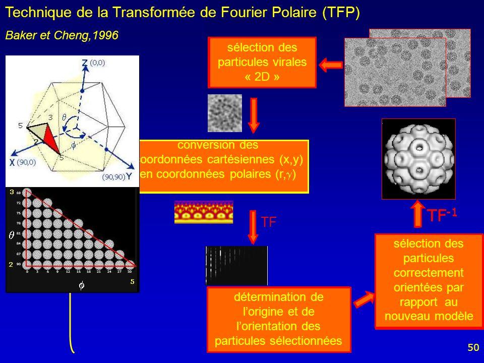 50 TF banque de transformées de Fourier polaires sélection des particules virales « 2D » sélection des particules correctement orientées par rapport à la banque de TFP TF -1 Modèle de départ : virus de lhépatite B (Conway et coll., 1997) projections 2D TF -1 sélection des particules correctement orientées par rapport au nouveau modèle TF -1 TFP conversion des coordonnées cartésiennes (x,y) en coordonnées polaires (r, ) détermination de lorigine et de lorientation des particules sélectionnées Technique de la Transformée de Fourier Polaire (TFP) Baker et Cheng,1996 TF sélection des particules virales « 2D » conversion des coordonnées cartésiennes (x,y) en coordonnées polaires (r, ) détermination de lorigine et de lorientation des particules sélectionnées