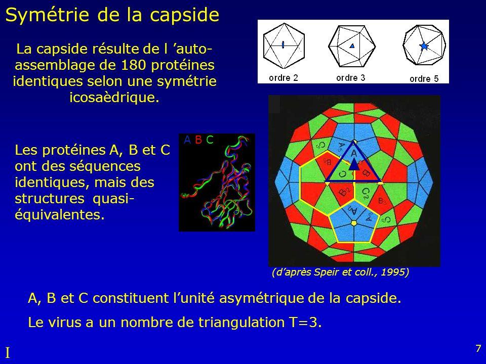 7 (daprès Speir et coll., 1995) La capside résulte de l auto- assemblage de 180 protéines identiques selon une symétrie icosaèdrique.
