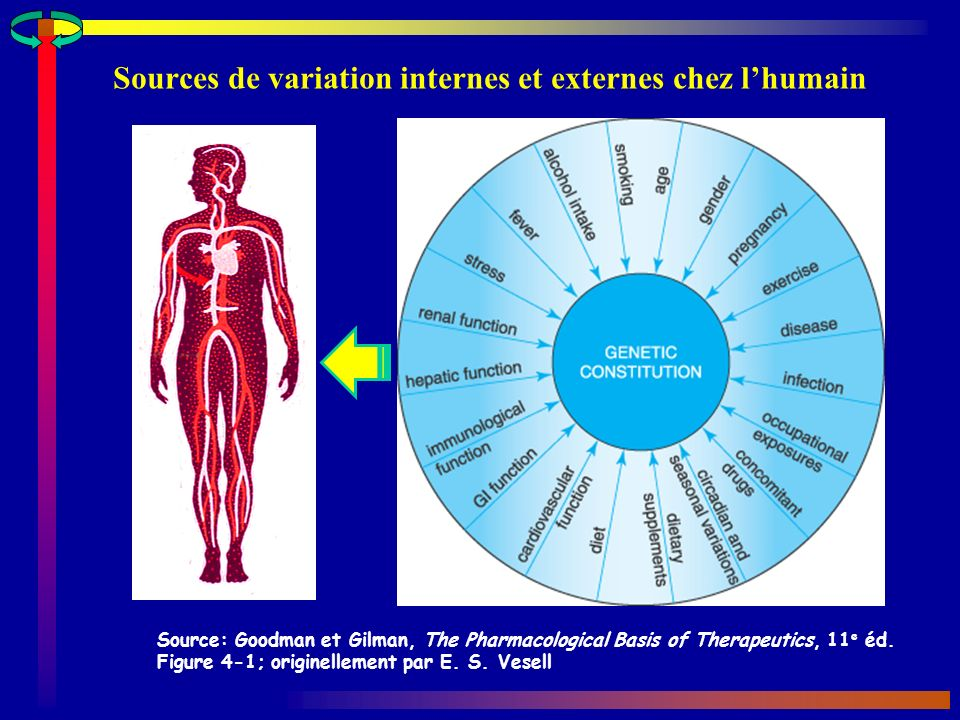 Sources de variation internes et externes chez lhumain Source: Goodman et Gilman, The Pharmacological Basis of Therapeutics, 11 e éd. Figure 4-1; orig