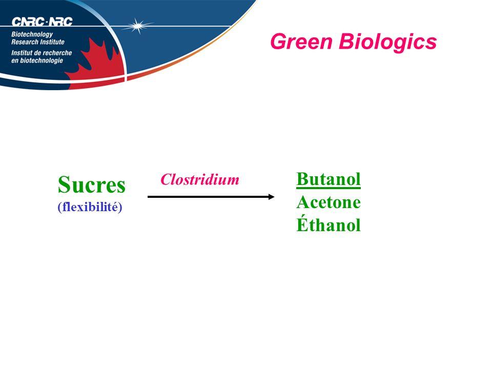 Green Biologics Sucres (flexibilité) Butanol Acetone Éthanol Clostridium