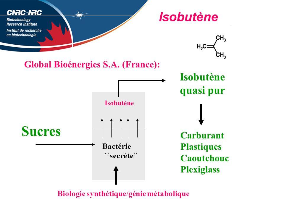 Isobutène Global Bioénergies S.A.