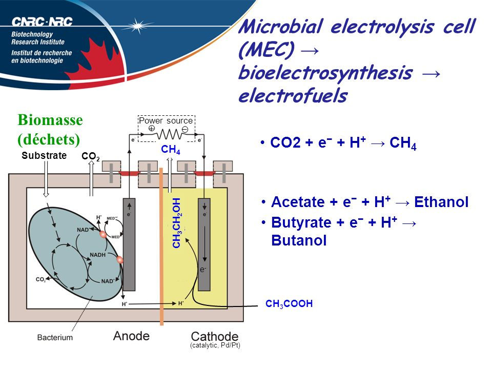 Microbial electrolysis cell (MEC) bioelectrosynthesis electrofuels H2H2 Power source +– CO 2 Substrate (catalytic, Pd/Pt) e-e- H2OH2O H2H2 CO2 + e + H