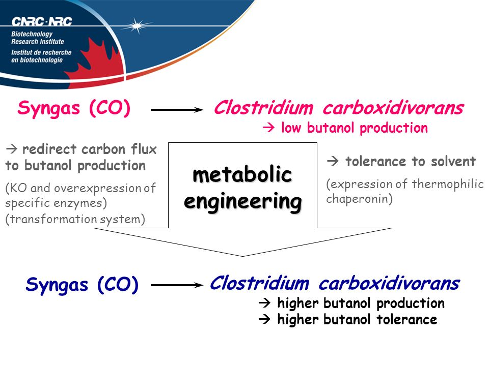 Clostridium carboxidivorans low butanol production Syngas (CO) metabolic engineering Clostridium carboxidivorans higher butanol production higher buta