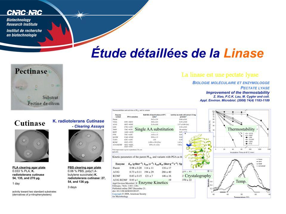 Étude détaillées de la Linase Substrat: Pectine de citron Cutinase Pectinase La linase est une pectate lyase