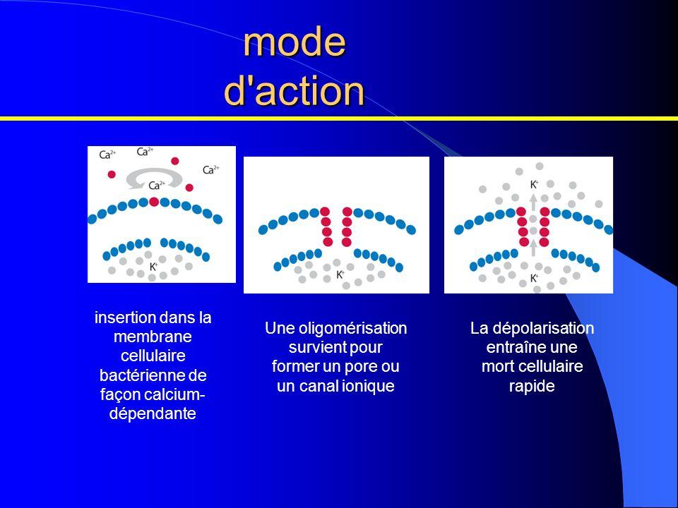 mode d'action insertion dans la membrane cellulaire bactérienne de façon calcium- dépendante Une oligomérisation survient pour former un pore ou un ca