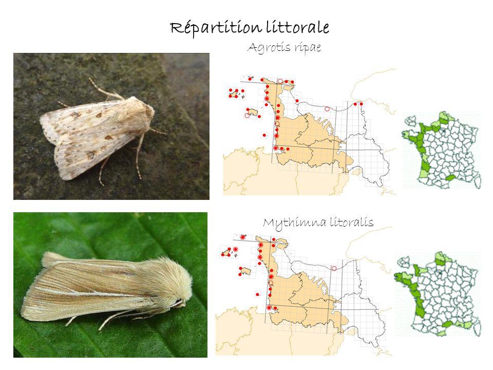 Agrotis ripae Répartition littorale Mythimna litoralis