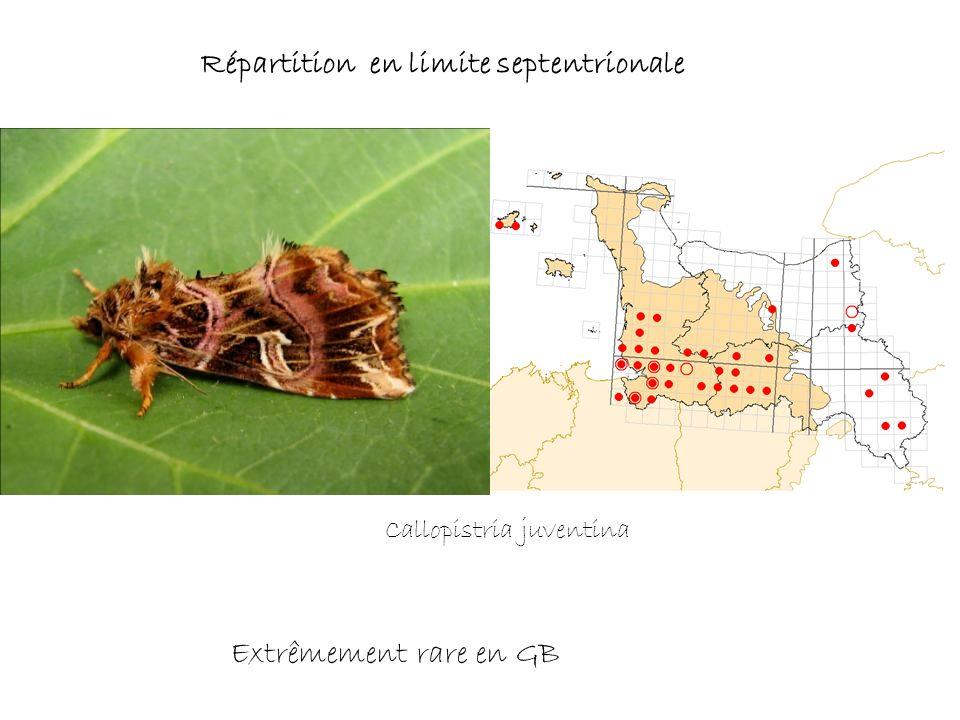 Répartition en limite septentrionale Extrêmement rare en GB Callopistria juventina