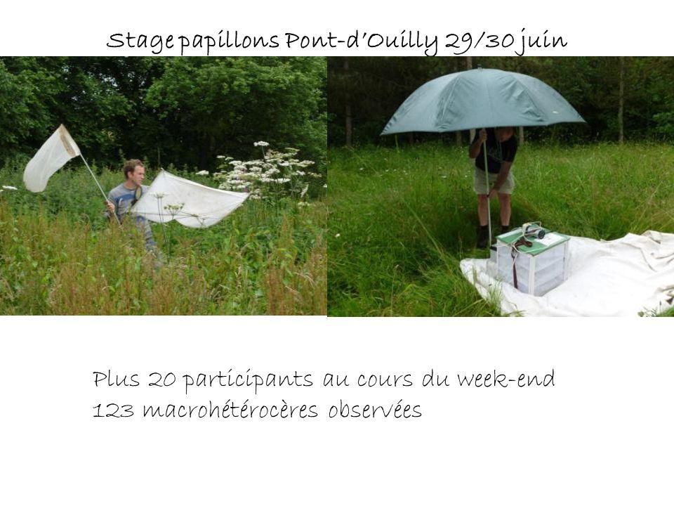 Stage papillons Pont-dOuilly 29/30 juin Plus 20 participants au cours du week-end 123 macrohétérocères observées