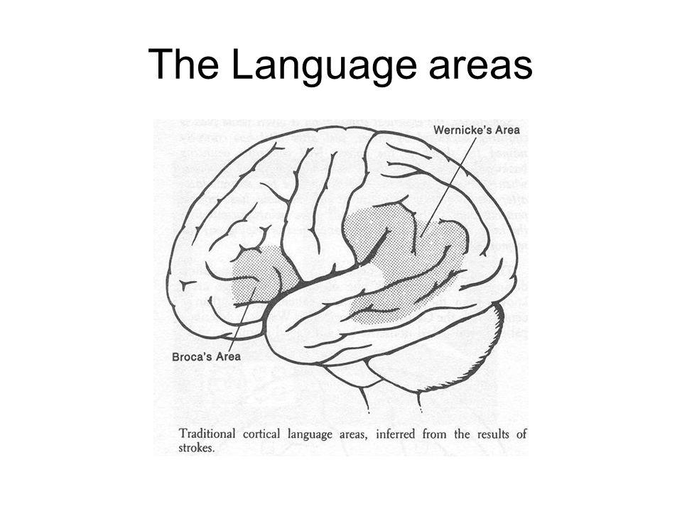 The Language areas