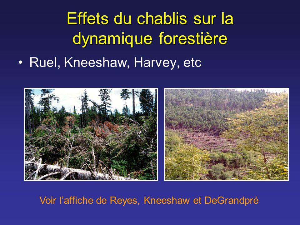 Effets du chablis sur la dynamique forestière Ruel, Kneeshaw, Harvey, etc Voir laffiche de Reyes, Kneeshaw et DeGrandpré