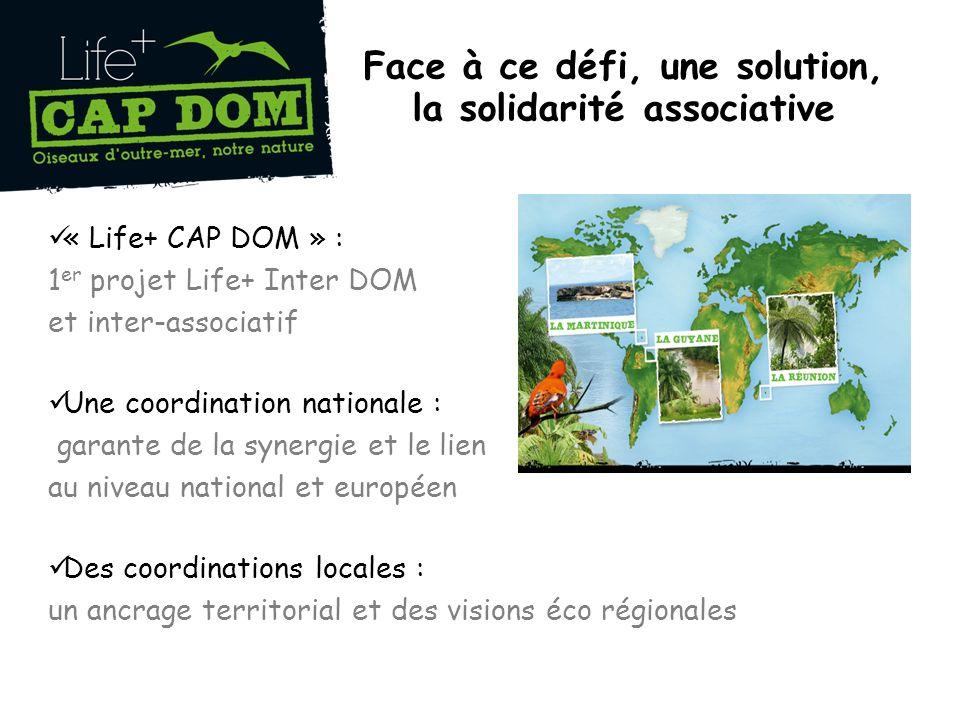 Face à ce défi, une solution, la solidarité associative « Life+ CAP DOM » : 1 er projet Life+ Inter DOM et inter-associatif Une coordination nationale : garante de la synergie et le lien au niveau national et européen Des coordinations locales : un ancrage territorial et des visions éco régionales