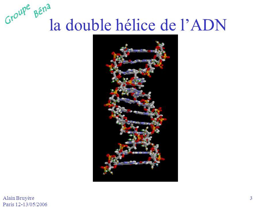 GroupeBéna Alain Bruyère Paris 12-13/05/2006 4 ADN-double hélice les deux hélices de lADN sont –reliées par des ponts hydrogène reliant les bases qui sont appariées, –c-à-d quune base A dune hélice est toujours reliée à une base T de lautre et –une base G de lune est toujours reliée à une base C de lautre et vice-versa