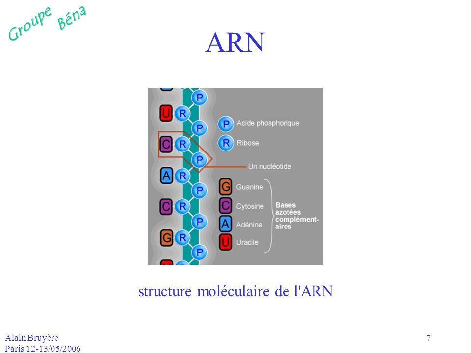 GroupeBéna Alain Bruyère Paris 12-13/05/2006 8 ADN-acide aminé-protéine lADN est présent dans le noyau des cellules a la faculté de se reproduire a la faculté dêtre transmis aux descendants lors des processus de reproduction des organismes vivants est a la base des processus biologiques aboutissant à la production des protéines –assemblage/séquence dacides aminés liés par des liasons peptidiques liasons covalentes réalisées au moyen de fonctions amide