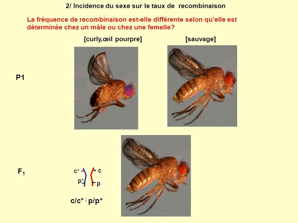 2/ Incidence du sexe sur le taux de recombinaison La fréquence de recombinaison est-elle différente selon quelle est déterminée chez un mâle ou chez u