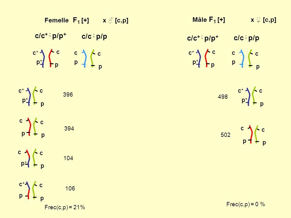 Femelle F 1 [+]x [c,p] Mâle F 1 [+]x [c,p] c/c + ; p/p + c/c ; p/p c/c + ; p/p + c/c ; p/p c p p+p+ c+c+ c p p+p+ c+c+ c p p c c p p c p+p+ c+c+ c p c
