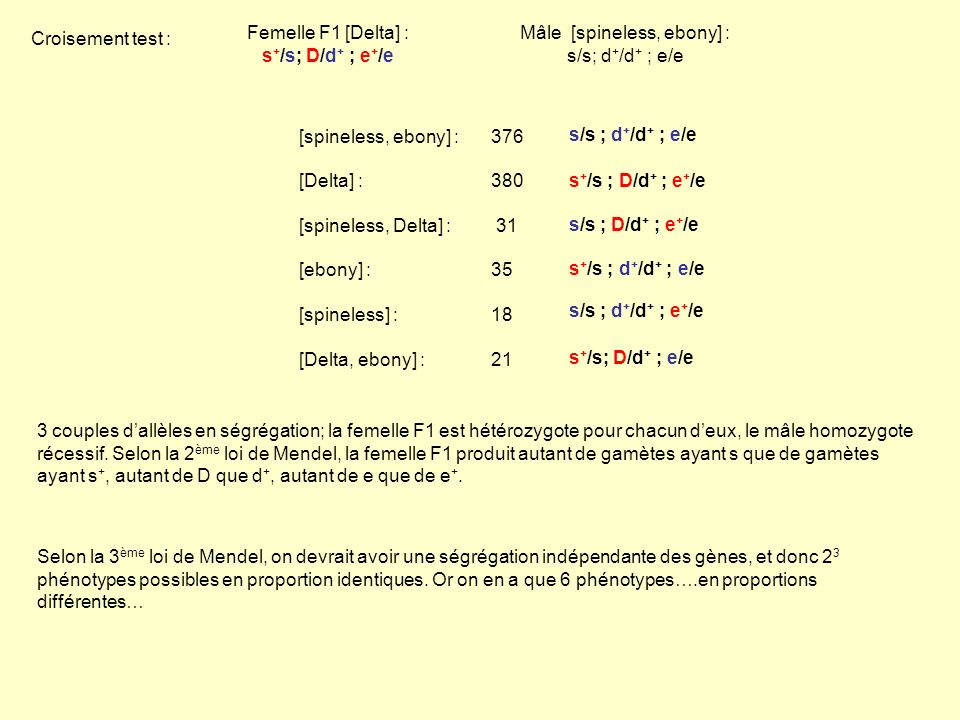 Femelle F1 [Delta] : s + /s; D/d + ; e + /e Mâle [spineless, ebony] : s/s; d + /d + ; e/e [spineless, ebony] : 376 [Delta] : 380 [spineless, Delta] :