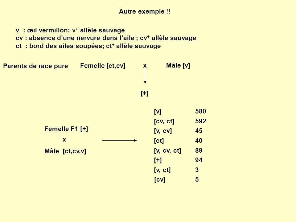 Autre exemple !! v : œil vermillon; v + allèle sauvage cv : absence dune nervure dans laile ; cv + allèle sauvage ct : bord des ailes soupées; ct + al