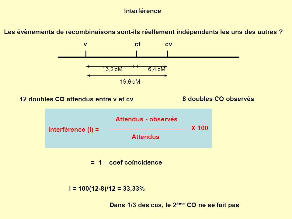 Interférence Les évènements de recombinaisons sont-ils réellement indépendants les uns des autres ? 6,4 cM13,2 cM 19,6 cM vctcv 12 doubles CO attendus
