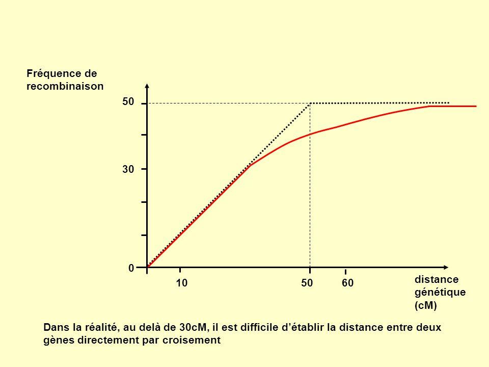 Fréquence de recombinaison 0 50 30 1050 distance génétique (cM) 60 Dans la réalité, au delà de 30cM, il est difficile détablir la distance entre deux