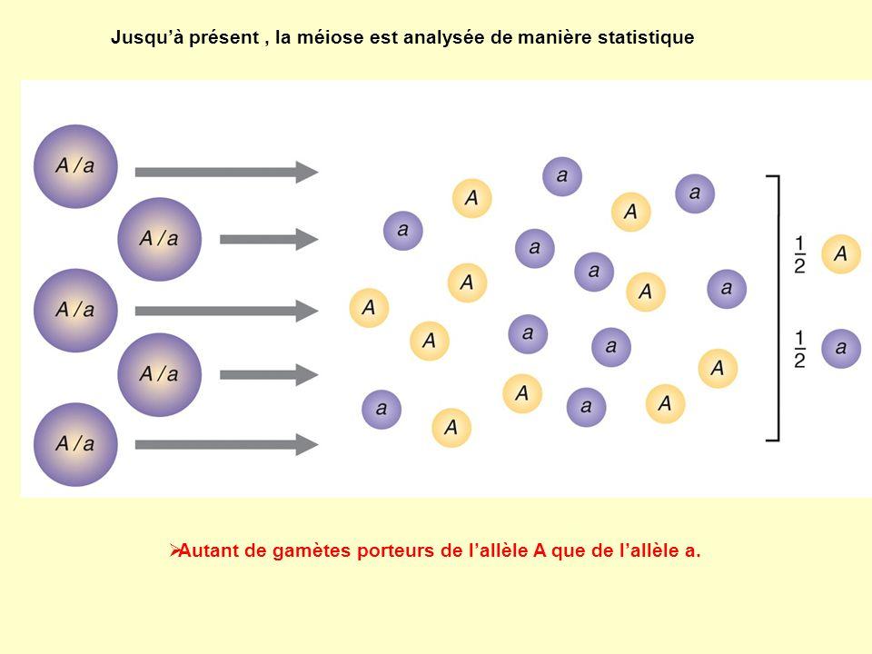 Analyse génétique des asques Jusquà présent, la méiose est analysée de manière statistique Autant de gamètes porteurs de lallèle A que de lallèle a.