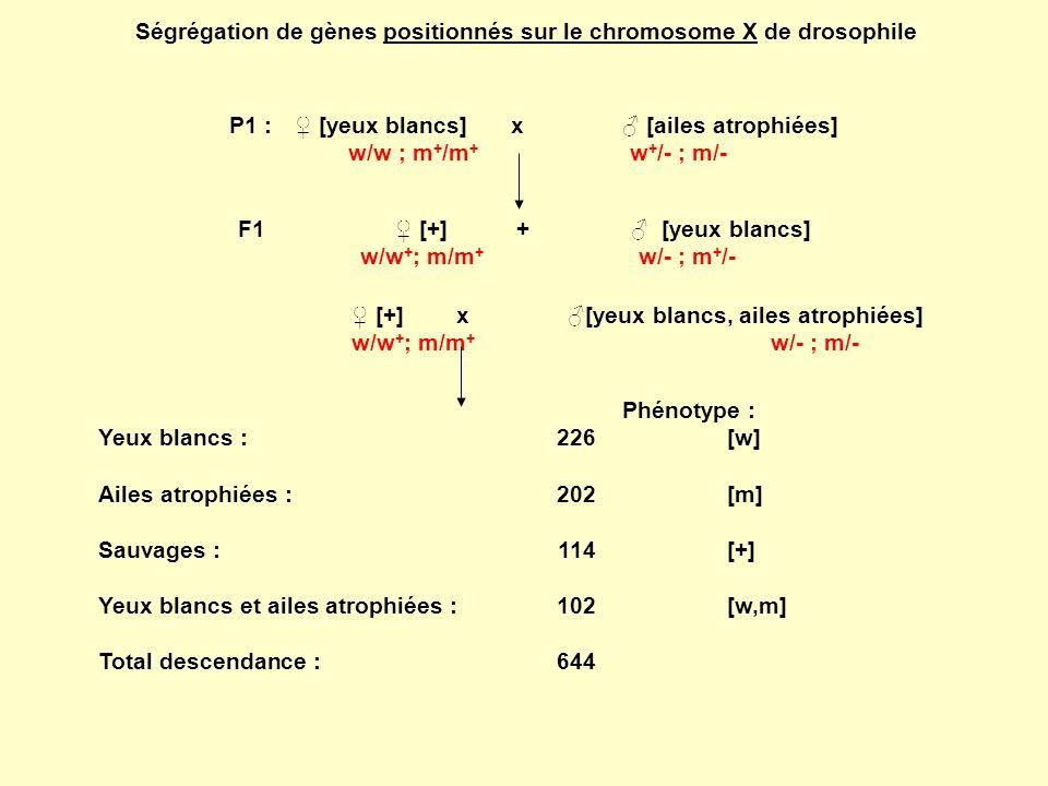 Le « sens » du croisement est donc particulièrement important chez la drosophile, car le mâle de la drosophile ne fait pas de recombinaison intra- chromosomique (pas de CO).
