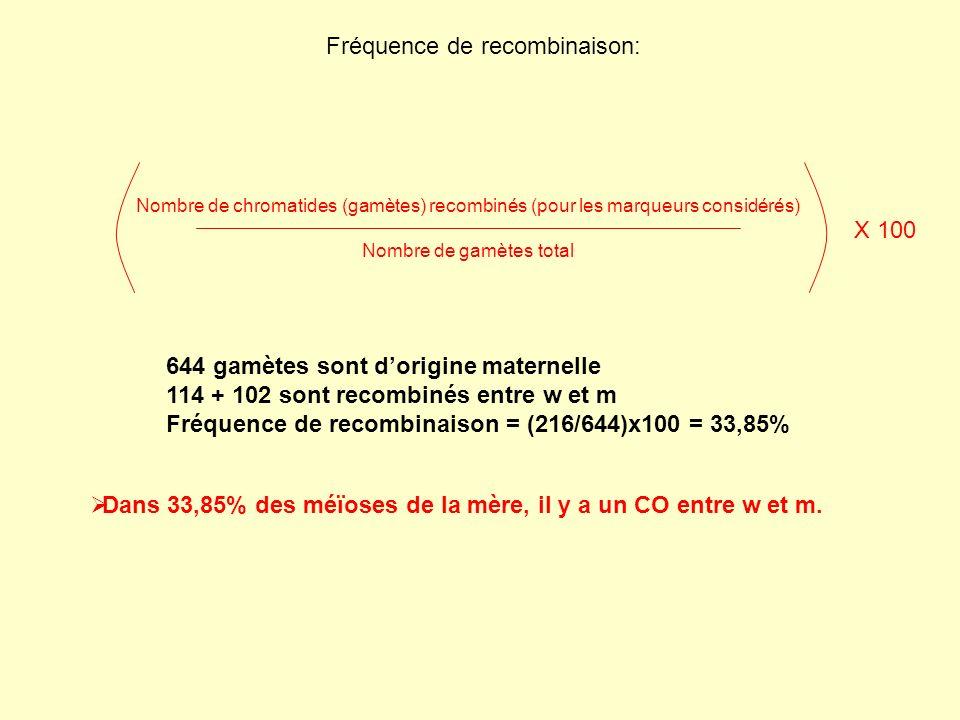 1/ Incidence de la configuration des allèles sur le chromosome sur la fréquence de recombinaison Femelle F1 w/w + ; m + /m w et m sont en configuration trans… w/w + ; m + /m w et m sont en configuration cis… P1 w/w ; m + /m + x w + /- ; m/- w m+m+ m w+w+ w m+m+ w + /w + ; m + /m + x w/- ; m/- w m m+m+ w+w+ m+m+ w+w+ w m+m+ m w+w+ w m m+m+ w+w+ w+w+ w+w+ m m w w m+m+ m+m+ m m w w w+w+ w+w+ m+m+ m+m+ …Ils se « repoussent » au moment de la méïose …Ils « sattirent »» au moment de la méïose [yeux blancs] x [ailes atrophiées] [+] x [ailes atrophiées, yeux blancs]
