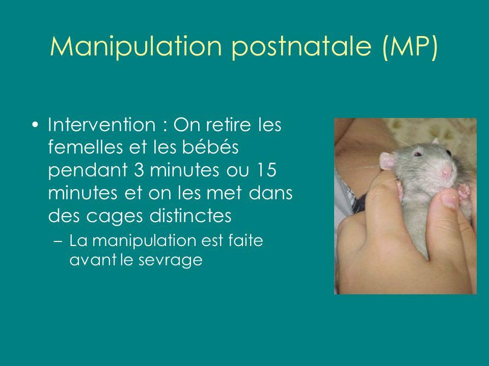 Manipulation postnatale (MP) Intervention : On retire les femelles et les bébés pendant 3 minutes ou 15 minutes et on les met dans des cages distincte