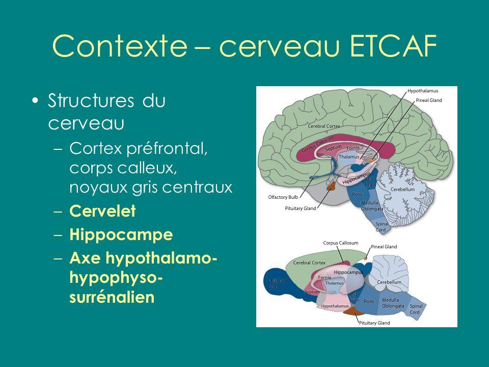 Contexte – cerveau ETCAF Structures du cerveau –Cortex préfrontal, corps calleux, noyaux gris centraux – Cervelet – Hippocampe – Axe hypothalamo- hypo