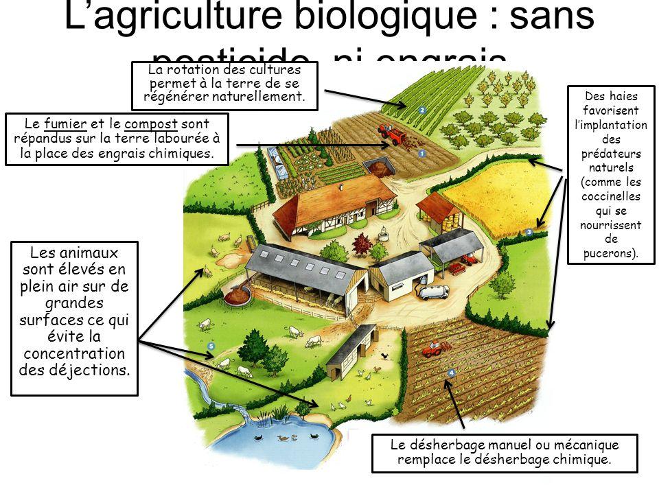 Lagriculture biologique : sans pesticide, ni engrais Les animaux sont élevés en plein air sur de grandes surfaces ce qui évite la concentration des dé