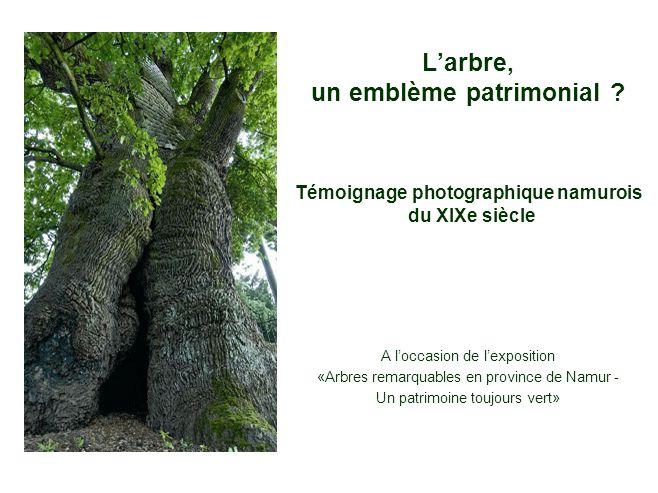 Larbre, un emblème patrimonial ? A loccasion de lexposition «Arbres remarquables en province de Namur - Un patrimoine toujours vert» Témoignage photog