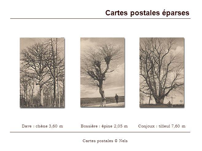 Cartes postales éparses Cartes postales © Nels Dave : chêne 3,60 mBossière : épine 2,05 mConjoux : tilleul 7,60 m