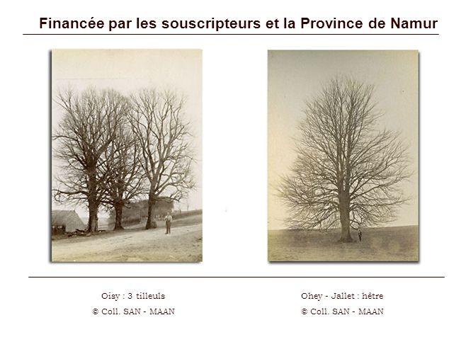 Financée par les souscripteurs et la Province de Namur Oisy : 3 tilleuls © Coll. SAN - MAAN Ohey - Jallet : hêtre © Coll. SAN - MAAN