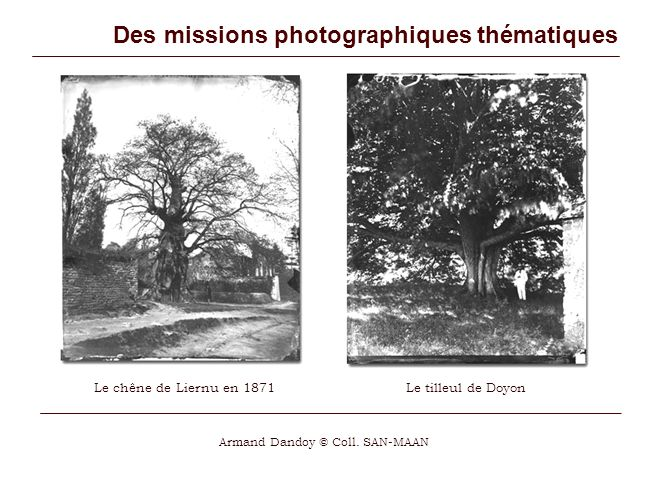Des missions photographiques thématiques Le chêne de Liernu en 1871 Armand Dandoy © Coll.