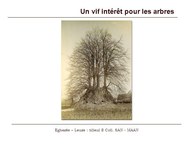 Un vif intérêt pour les arbres Eghezée – Leuze : tilleul © Coll. SAN - MAAN